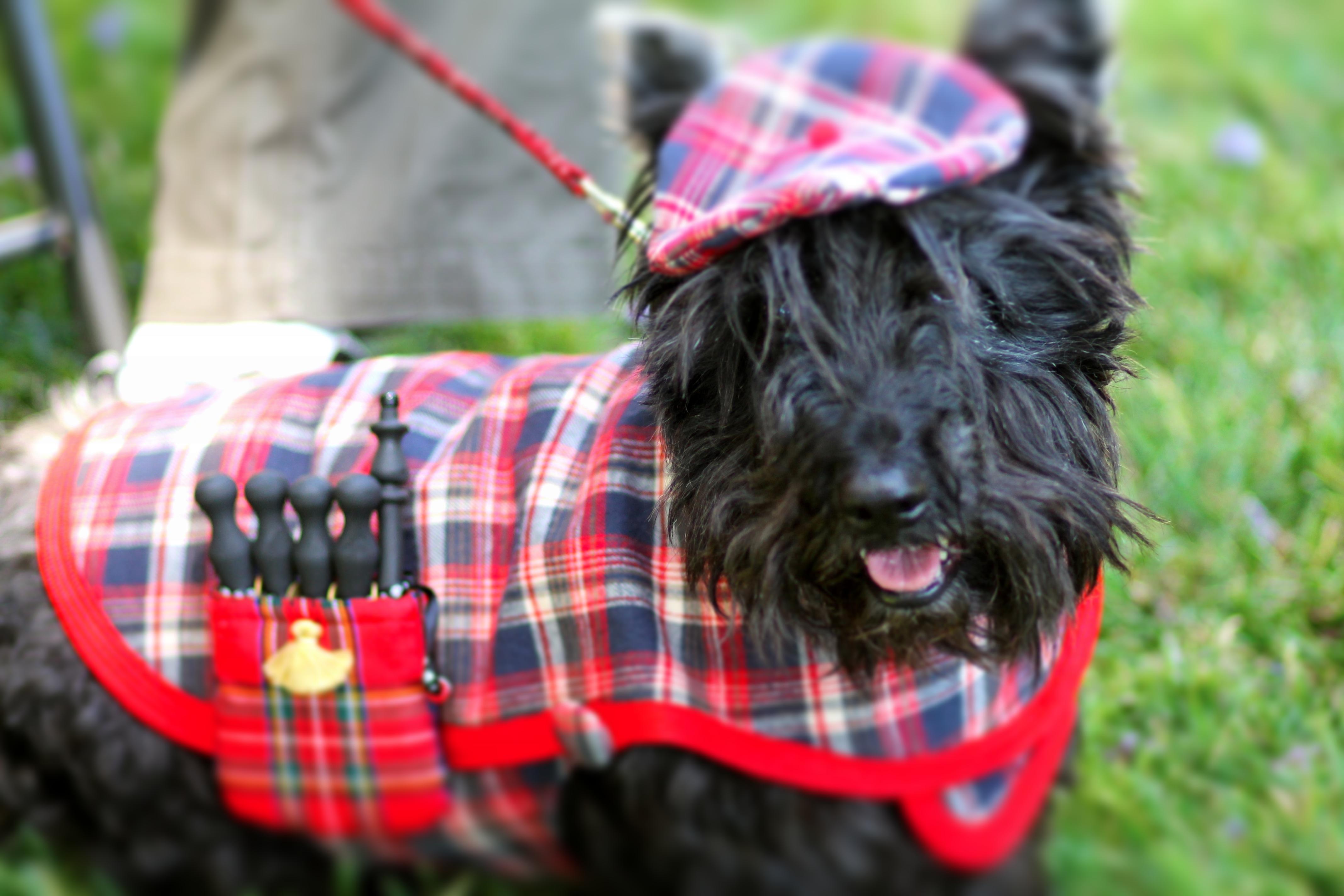 brandy barks best costume award modern scottie dog