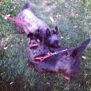 Murphy and Brandy