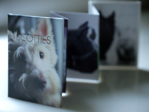 Scotties_accordion_front