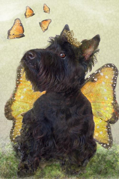 molly in wings in garden final email
